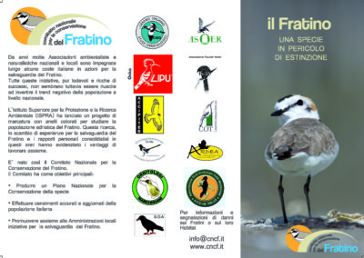 Fratino Flyer by FAB813