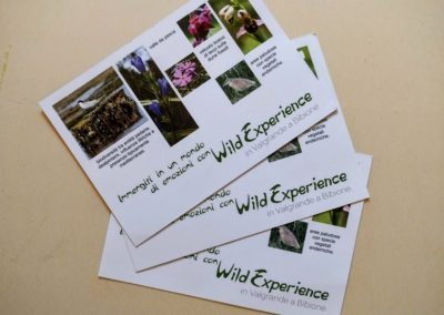 Wild Experience flyers by FAB813