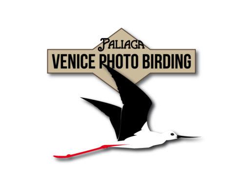 Venice Photo Birding